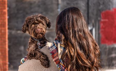 Dog Personality Quiz