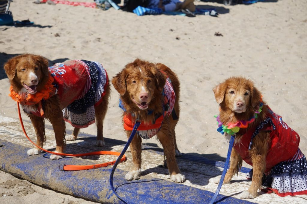 Surf City Dogs